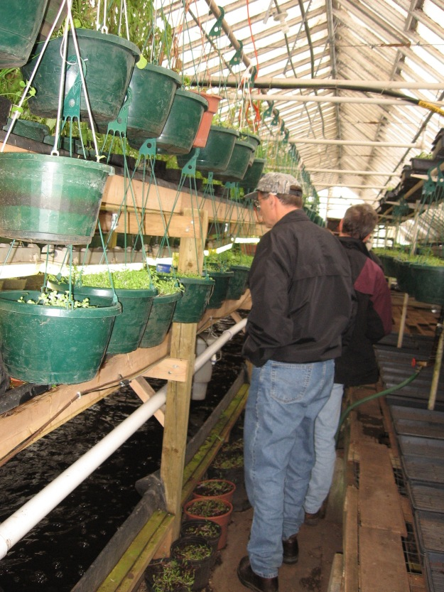 Mike inspects the aquaponics system