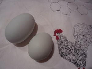 These eggs were collected April 17.  I'd bet on the one on the left having a double yolk!  (The rooster is NOT actual size.)
